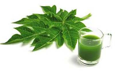benefits-of-papaya-leaf